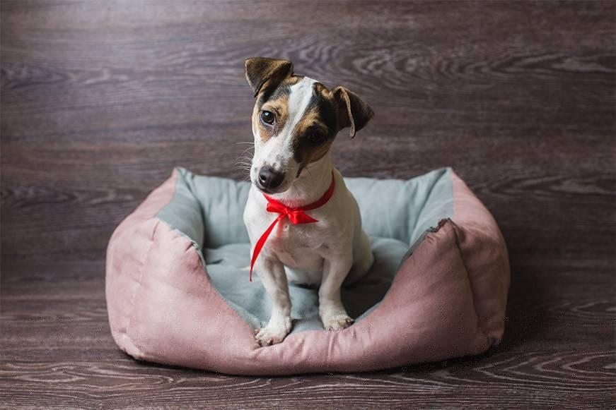 Как правильно выбрать лежак для собаки